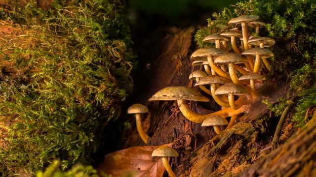 Champignons Sous Bois Cueillette