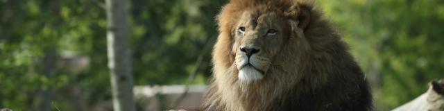 La Terre des Lions - visiter le zoo de Beauval