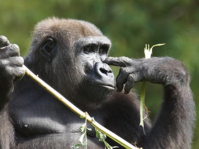 Primates Zooparc De Beauval Nos Conseils Visite Billetterie