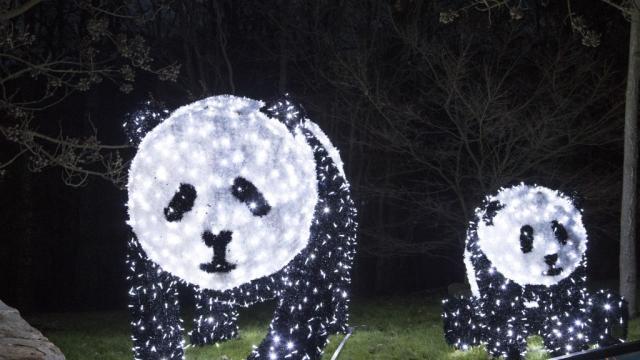Zoo Beauval Illumination Noel Pandas
