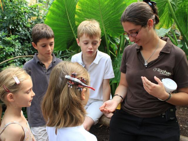 Flavie Pedagogie Zooparc De Beauval