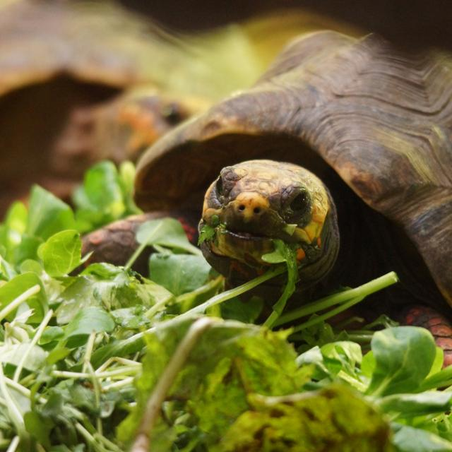 Tortue Reptiles Zooparc De Beauval