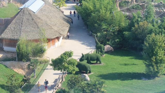 Zoo De Beauval Amenagements (2)