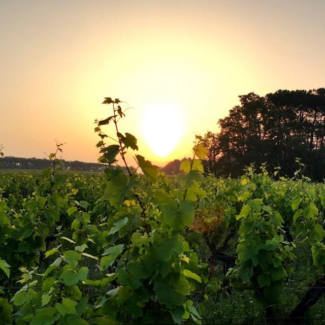Domaine De La Mechiniere Experience Vigne Soleil Rencontre Avec Une Vigneronne
