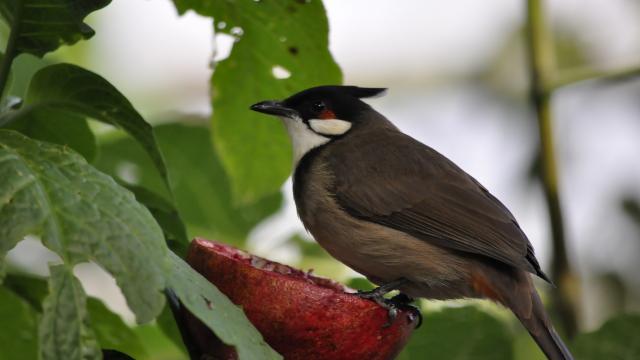 Oiseaux Zooparc Beauval Volière (3)