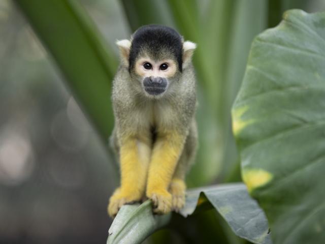 Zoo De Beauval Dome Equatorial Primates